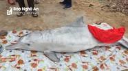 Cá heo và cá ông dài gần 2m chết dạt vào bờ biển Nghệ An