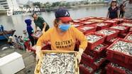 Trải nghiệm họp chợ cá từ lúc bình minh ở Cửa Lò