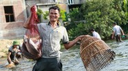 'Nơm thủ' ở Nghệ An bắt hàng tấn cá trong 2 giờ đồng hồ