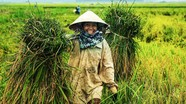 Vẻ đẹp của phụ nữ Nghệ An trong những khoảnh khắc lao động đời thường
