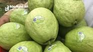 'Ba có' cho sản phẩm nông nghiệp Nghệ An