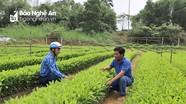 Xã Kỳ Sơn (Tân Kỳ): Xây dựng nông thôn mới, nâng cao mức sống người dân