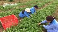JICA giúp Nghệ An xây dựng chuỗi giá trị trong sản xuất nông nghiệp
