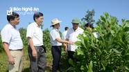 Khai thác tốt nguồn thu để bảo vệ, phát triển rừng