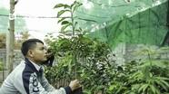 Chàng kỹ sư công nghệ thông tin đam mê với ngành nông nghiệp