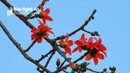Đẹp nao lòng hoa lá tháng 3 ở miền gió Lào cát trắng