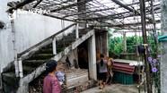 """""""Khám phá"""" những ngôi nhà hai tầng dành riêng cho trâu bò ở Nghệ An"""