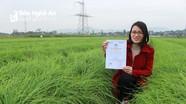 Hành tăm Nghi Lộc được cấp chứng nhận VietGap