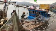 Mùa cá trích, ngư dân Nghệ An thu tiền triệu mỗi ngày
