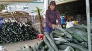 Nghệ An: Bí xanh giá chỉ 2.000 đ/kg cũng không có người mua