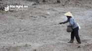 Độc đáo nghề săn bắt cáy dưới sông ngập mặn ở Nghệ An