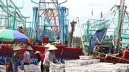 Thương lái ép giá hải sản khi hàng trăm tàu cá về tránh bão