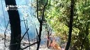 Cùng con trai vào dập lửa cứu rừng, một phụ nữ Nghệ An đã tử vong