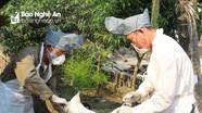 Nghệ An phát hiện thêm ổ dịch thứ 4 cúm gia cầm H5N6
