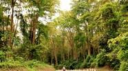 Nghệ An tập trung nâng cao chất lượng, giá trị vốn rừng