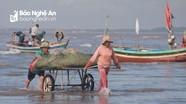 Đi lộng đánh bắt hải sản, ngư dân Nghệ An thu nhập tiền triệu mỗi ngày