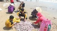 Sau mưa, người dân Nghệ An rủ nhau đi vớt 'lộc biển'