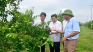 Chủ tịch UBND tỉnh thăm các mô hình trồng, chế biến nông sản ở Nghĩa Đàn