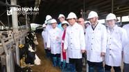 Gần 1.600 con bò sữa nhập khẩu từ Mỹ về Nghệ An đầu năm 2020