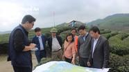 Cố vấn cao cấp JICA thực địa tại Đảo chè Thanh Chương