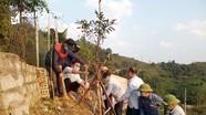 Trường tiểu học vùng cao Nghệ An trồng để bảo tồn cây đào  đá