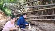 Giáo viên vùng cao Nghệ An lên rừng lấy măng ủng hộ người dân thành Vinh phòng, chống dịch