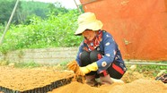 Vất vả nghề 'nghịch đất' kiếm tiền ở Nghệ An