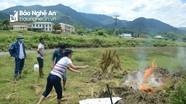 Sét đánh chết đàn bò 10 con ở Nghệ An