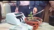 Thương vụ mua bán lan đột biến 1,6 tỷ đồng ở Nghệ An?