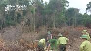 Điều tra vụ phá rừng tự nhiên ở huyện Tân Kỳ