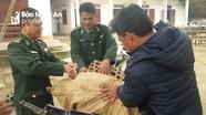 BĐBP trao lợn giống cho các hộ nghèo khu vực biên giới