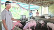 Nghệ An: Giá lợn hơi tăng vọt, ngành Công Thương tính phương án tích trữ lợn đông lạnh
