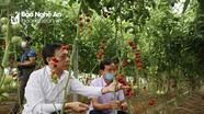 Nghệ An xây dựng 4 mô hình điểm về sản xuất, chế biến nông sản an toàn