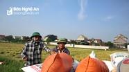 Nông dân Nghệ An phấn khởi vì giá lúa vụ Xuân tăng cao