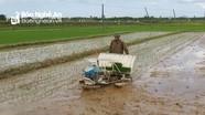 Nghệ An: Hội Nông dân đứng ra nhận ruộng hoang canh tác