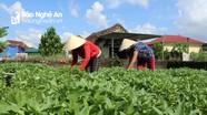 Nông sản được 'thông tắc' khi Nghệ An chuyển sang trạng thái bình thường mới