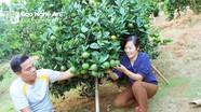 Vợ chồng trẻ tiên phong trồng cam ở vùng biên đất Quế