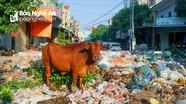 Đàn bò nhởn nhơ tại bãi rác 'khổng lồ' giữa khu dân cư thành phố Vinh