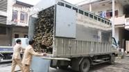 Bắt giữ ô tô chở gỗ lậu ngụy trang bằng mét cây