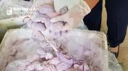 Nửa tấn nội tạng lợn bốc mùi hôi thối dùng giấy kiểm dịch giả