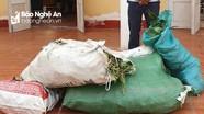 Xử phạt thanh niên vận chuyển trái phép 90kg phong lan rừng