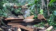 Khởi tố 4 đối tượng lên rừng phòng hộ xẻ gỗ về làm nhà