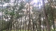 Phát hiện thi thể người đàn ông trong rừng thông