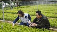 Nghệ An sẽ trồng mới 17.000 ha rừng nguyên liệu