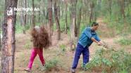 Sẽ xây dựng đường băng cản lửa phòng cháy rừng vùng giáp ranh Nghi Lộc và Diễn Châu