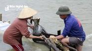 Nghệ An: Còn trên 15.000 hộ dân chưa có điện lưới quốc gia