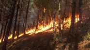 Cháy rừng thông ở huyện Diễn Châu