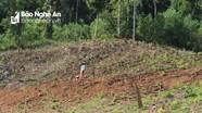 Quỳ Châu xử lý 40 vụ phá rừng tự nhiên để trồng keo