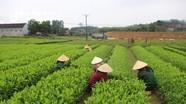 Quy hoạch lâm nghiệp Nghệ An phải phù hợp với chiến lược phát triển kinh tế - xã hội