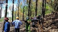 Truy tìm được người gây cháy rừng ở thị xã Hoàng Mai